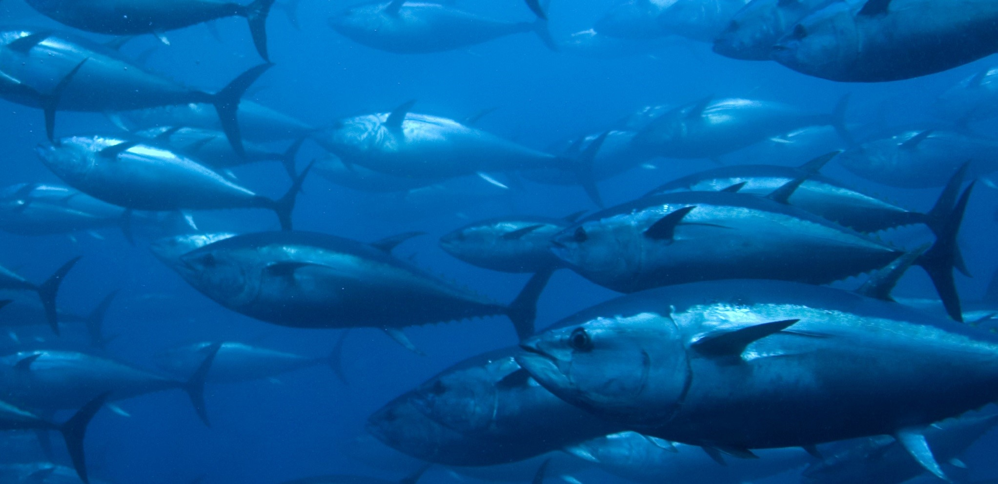 protect marine resources