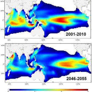 modelling marine ecosustems