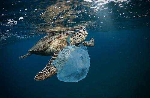 plastic-coated turtle